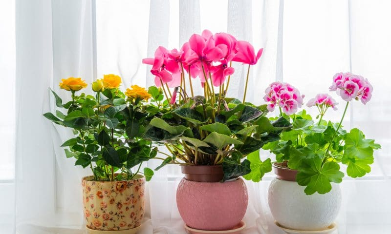 kwiaty w domu
